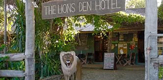 01-lions