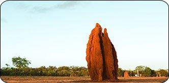 Termite Mound 1